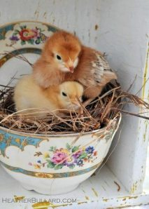 Easter chicks in cup