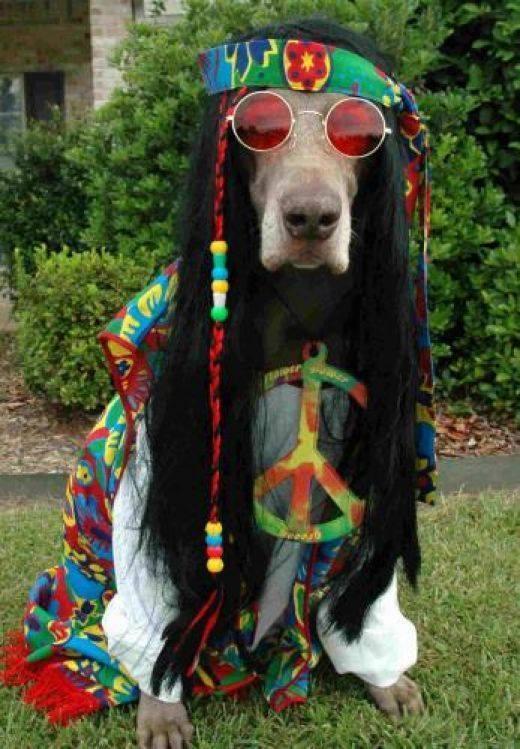 Peace dude.