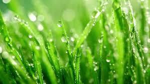 summer rain2