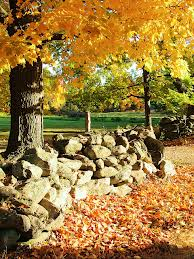 STONEWALL AND AUTUMN LEAVES
